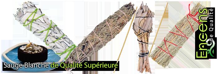 Sauge Blanche 100% Naturelle de Qualité Supérieure